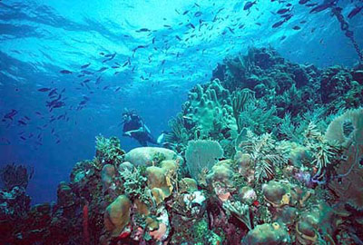 the importance of ocean exploration Ocean exploration: technology revealing explore all parts of the ocean as ocean exploration increases and high-definition video and collect important.